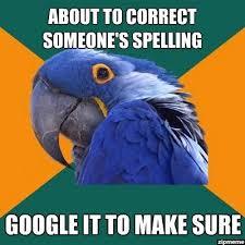Socially Awkward Penguin Meme Generator - 128 best paranoid parrot images on pinterest funny stuff ha ha