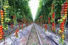 Veg Garden Ideas Fall Ideas For Vegetable Garden Vegetable Garden Ideas