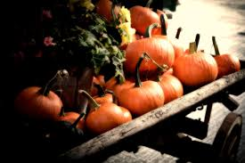 pumpkin screensavers fall pumpkin screensavers wallpaper wallpaper hd background