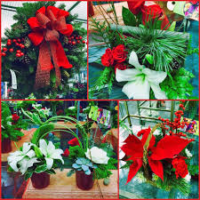 lafayette florist festive flowers and plants photo courtesy brian wheat a flickr