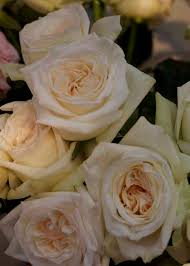 garden roses by alexandra farms flirty fleurs the florist blog