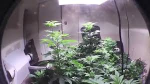 spare room u0027s grow rooms youtube