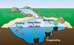 Types Of Fish For Garden Ponds - plants for ponds everything ponds com