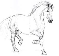 stallion sketch by south wind on deviantart