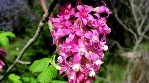 native plants portland oregon plants that attract hummingbirds and butterflies youtube