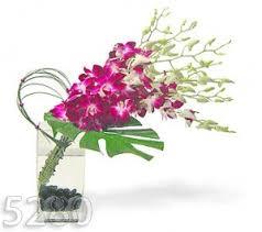 Orchid Flower Arrangements Denver Orchid Arrangement
