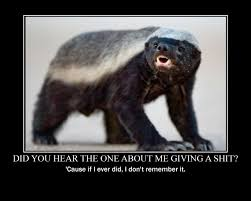 Honey Badger Memes - image don tcare honey badger know your meme