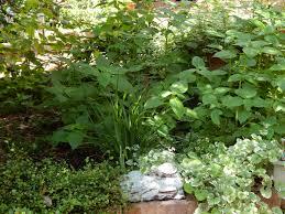 in the garden debby weighs in