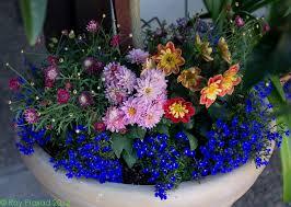 Long Blooming Annual Flowers - gardening archives kremp florist blog
