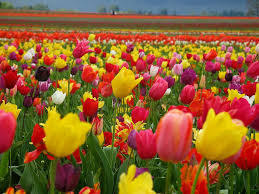 Pictures Of Flowers by Flower Wallpapers 47 Wujinshike Com
