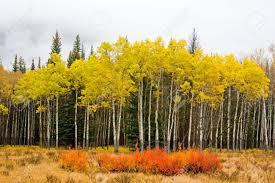 colorful autumn leaves beautiful fall outdoors nature