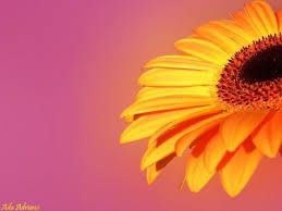Flowers Colors Meanings - best 20 meaning of flowers ideas on pinterest flower meanings