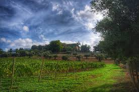 harvest 2015 at granhotelsonnet mallorca eco friendly