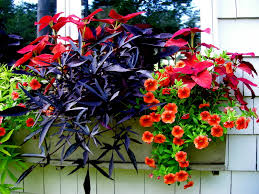 another pretty window box for partial shade coleus 2 different