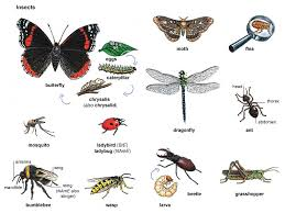 butterfly noun definition pictures pronunciation and usage