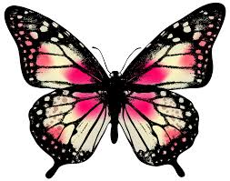 large pink butterfly png clip image gallery yopriceville