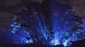 tree lights at the morton arboretum morten arboretum 2016 2017 excellence awards in live design live