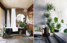 home interior plants tag house plants 2016 style my home