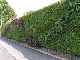 apartment fresh green wall with vertical wall garden and