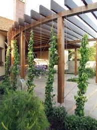Best  Pergolas Ideas On Pinterest Pergola Diy Pergola And - Pergola backyard designs