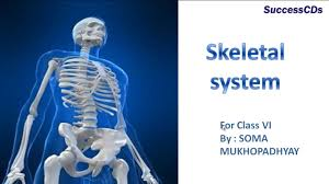 skeletol system cbse science lesson class 6th youtube