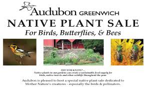 new england native plants spring native plant sale audubon greenwich