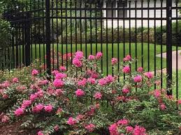 Top Flowering Shrubs - 221 best landscaping ideas images on pinterest landscaping