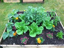 garden blog shifting growth raised beds u2014 shifting growth u0027s