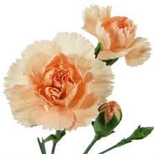Wholesale Carnations Carnations Sam U0027s Club