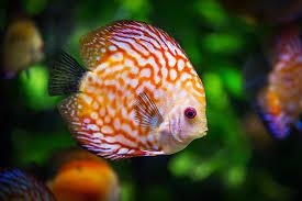 aquarium plant fertilizer best substrate for planted tank 2018