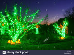 Outdoor Christmas Trees by Outdoor Christmas Trees Have Been Decorated With Green Lights And
