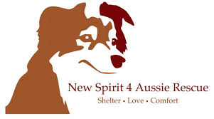 south carolina australian shepherd rescue hale pet door australian shepherd rescue organizations