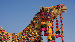 Decorated Decorated Camel Wallpaper