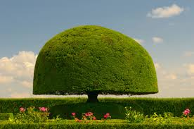 Topiary Balls With Flowers - 53 stunning topiary trees gardens plants and other shapes