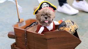 dressed up pets and more in this week u0027s best halloween themed