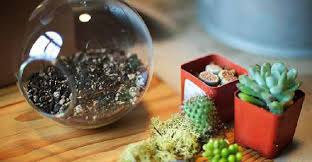 how to make a succulent terrarium diy projects craft ideas u0026 how