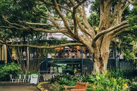 Botanical Gardens Brisbane Cafe Botanic Gardens Restaurant Best Cafes City Secrets