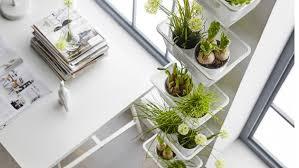 plantes bureau plantes vertes de bureau les meilleures plantes pour fleurir un