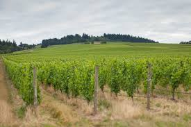 essential winemakers of oregon pinot noir riesling opening a bottle