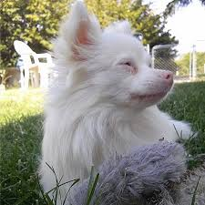 Are Dogs And Cats Color Blind The Difference Between Albino Dogs And White Dogs