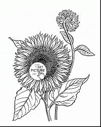 superb sunflower flower coloring pages printable with sunflower