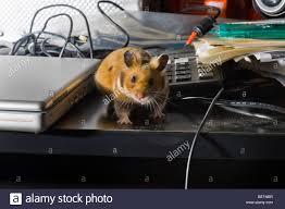 bureau free free range free range hamster bureau attitude desk pc computer mac