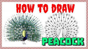 how to draw peacock realistic art pencil drawing draw sketch