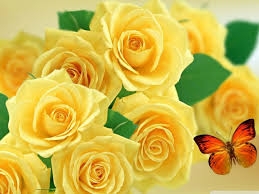 Roses And Butterflies - yellow roses and butterflies hd desktop wallpaper for 4k ultra