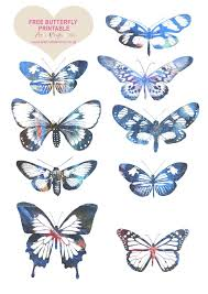 25 printable butterfly ideas butterfly