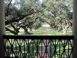 celtic tree guardian oak the guardian gateway