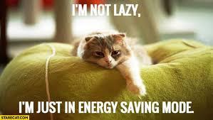 Sleepy Cat Meme - i m not lazy i m just in energy saving mode sleepy cat starecat com