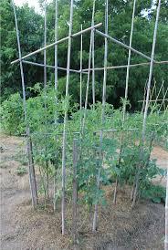 homelife 10 best plants for vertical gardens 43 best vertical gardens images on pinterest vertical gardens