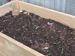 start a vegetable garden for 25 brown thumb mama