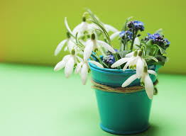 free images white flower bloom decoration green color